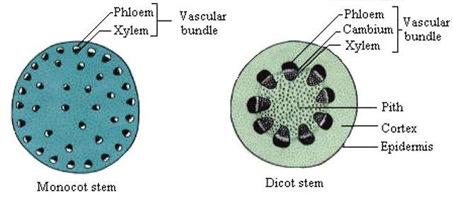 A P  Biology